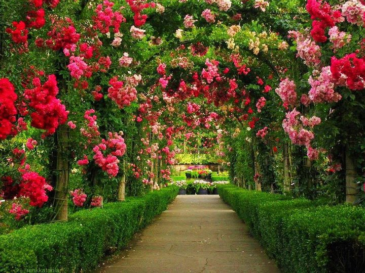 Beautiful Gardens 15.jpg