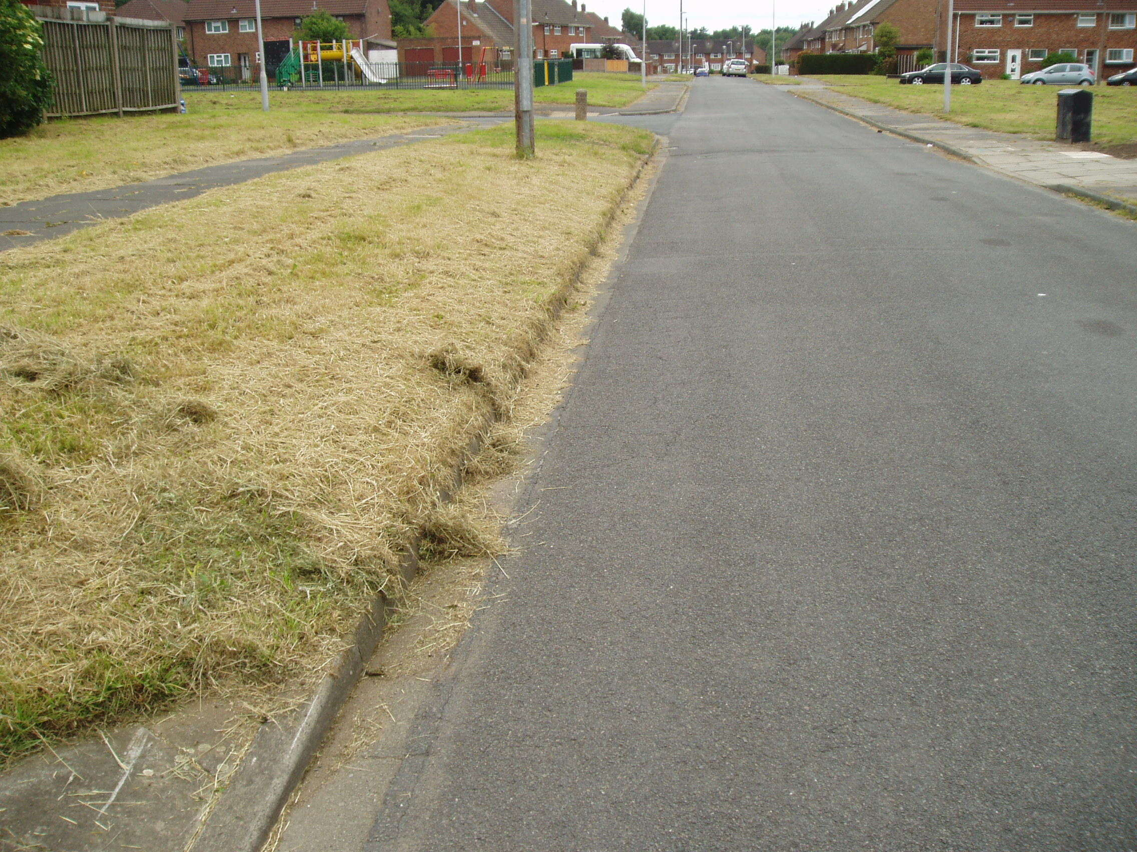 Attached picture GRASS 5.JPG