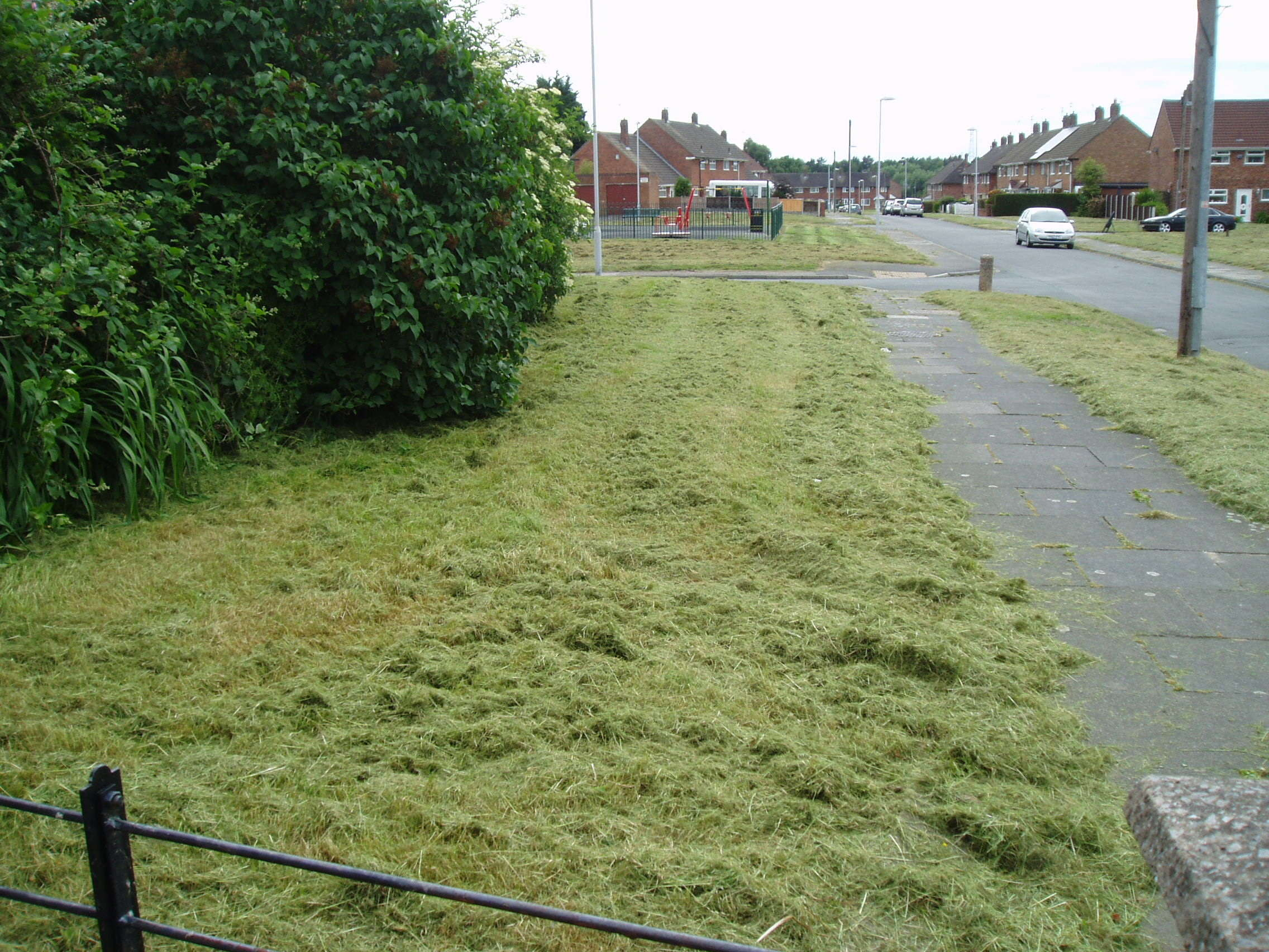 Attached picture GRASS 3.JPG