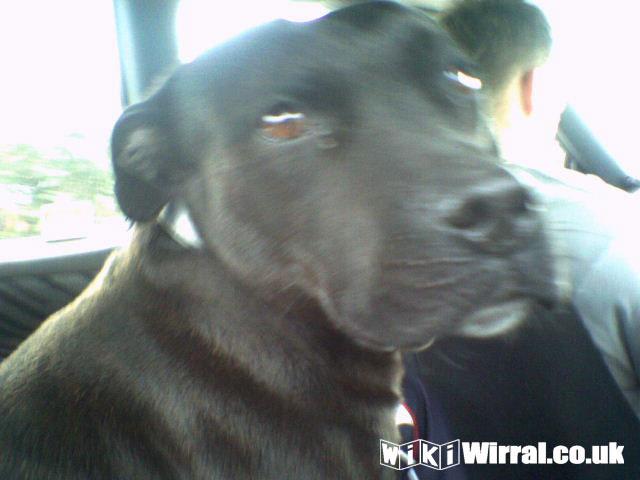 534-wikiwirral-wezz.jpg