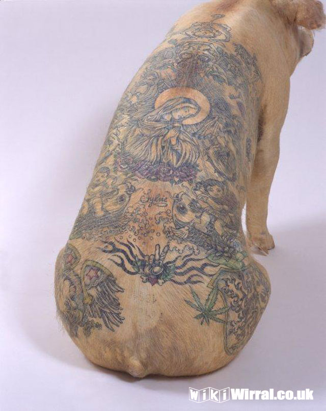 tattooed pig.jpg