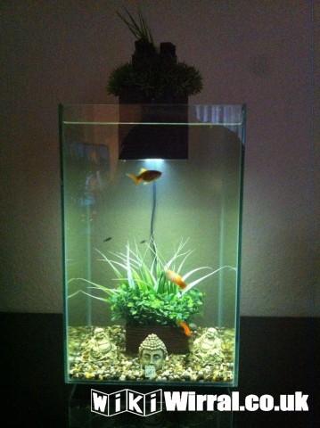 Fluval chi 25l fish tank accessories wirral for Fluval chi fish tank