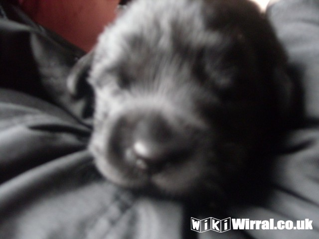 Bertie 2 weeks 1 day 014 (Copy).jpg
